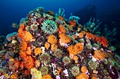 Sea anemones and marine life