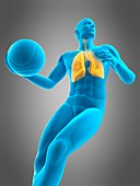 Lungs of a basketball player, illustration