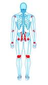 Human ligaments, illustration