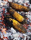 BBQ Yellow Corn