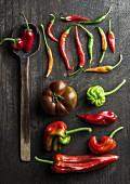 Holzlöffel, Tomate und verschiedene Paprika- und Chilischoten auf Holzuntergrund