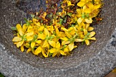 Fresh St. John's wort flowers in a mortar