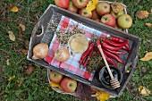 Zwiebeln, Chilischoten, Apfelessig, Honig und Kräuter auf Holztablett