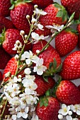 Strawberries and sloe blossoms