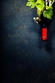 Rotweinflasche und Weinblätter auf schwarzem Untergrund