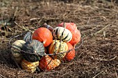 Various pumpkins in a wire basket in a field