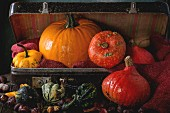 Assortment of different decorative and edible pumpkins and chestnuts in vintage suitcase with red sacking