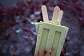 Avocado and Cherry Popsicles