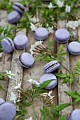Lavender and Chocolate Macarons with Jasmine Flowers
