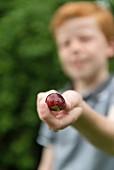 Junge hält frisch gepflückte Pflaume in der Hand