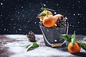 Winterliches Stillleben mit Mandarinen und Zapfen in Holzeimer vor Hintergrund mit Schnee