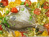 John Dory fish oven cooked on a bed of tomatoes