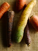 Different carrot varieties on a jute cloth