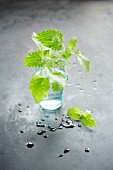 Fresh lemon balm in a glass