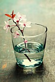 Spring blossoms in glass vase on wooden surface