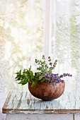 Bouquet of fresh aromatic garden herbs mint, thyme and lavender in half of coconut shell on old wooden table