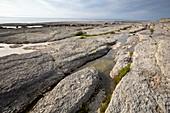 Eroded limestone coast, Newfoundland, Canada