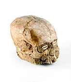 Plastered human skull, Neolithic period