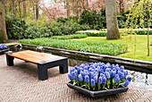 Hyacinths at Keukenhof Gardens, Netherlands