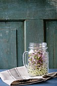 Healthy diet. Fresh Garlic and Radish Sprouts in glass mason jar, standing on kitchen towel over blue wooden table