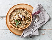 Risotto with wild mushrooms with parsley and parmesan on blue background