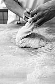 Brotherstellung: Bäcker beim Teigfalten auf bemehlter Arbeitsfläche