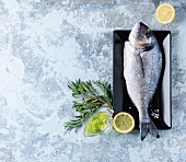 Raw bream fish with herbs, lemon and olive oil over blue textured background