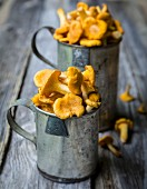 Fresh chanterelle mushrooms in metal cups