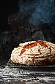Frisch gebackenes Brot dampft aus