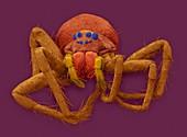 White-banded fishing spider, SEM