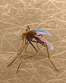 Mosquito on human skin, SEM