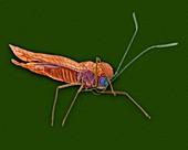 Azalea lace bug, SEM