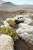 Ancient lava flow, Lanzarote, Canary Islands