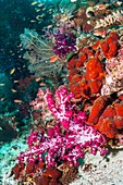Soft coral and sponge on a coral reef