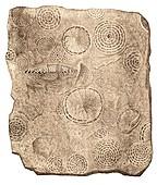 Foraminifera illustration