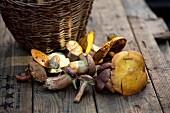 Basket of Fresh Mushrooms