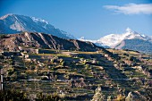 Hillside vineyards below Sion Champlan in the Swiss canton of Valais