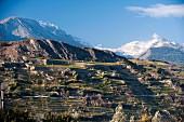 Hügel mit Weinterrassen vor Sion Champlan im Kanton Wallis, Schweiz