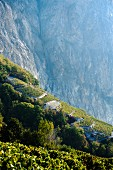Terraced vineyards in front of mountain cliff-face in Swiss canton of Valais