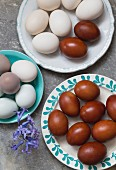 Various coloured eggs on plates