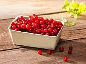 Rote Johannisbeeren im Pappschälchen