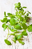 Fresh organic watercress