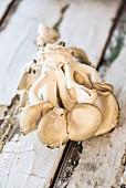 Frische Austernpilze auf verwittertem Holzuntergrund