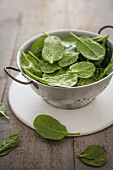 Fresh spinach leaves in colander