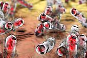 Destruction of tuberculosis bacteria, illustration
