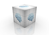 White cube with brain