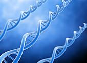 DNA strand