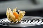 A physalis on a coffee machine