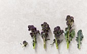 Graphic shot of florets of purple sprouting broccoli on stone background