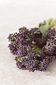 Close up detail of a floret of purple sprouting broccoli